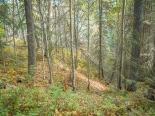 A shaft of sunlight paints a path on an open hillside.